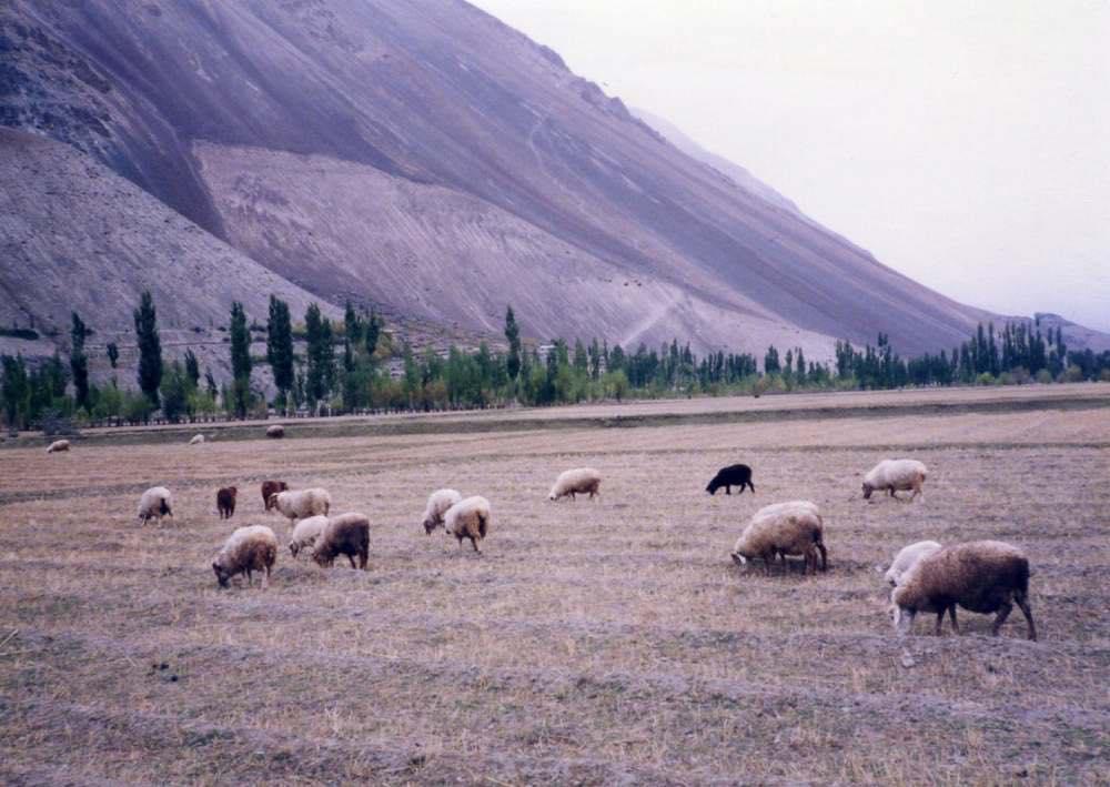 パキスタンの旅