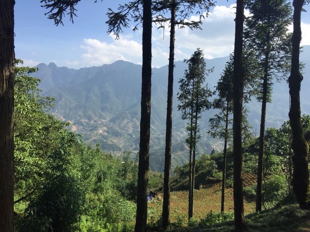 ベトナム2 サパ ハムロンの丘