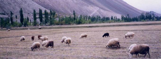 パンダール(パキスタン)