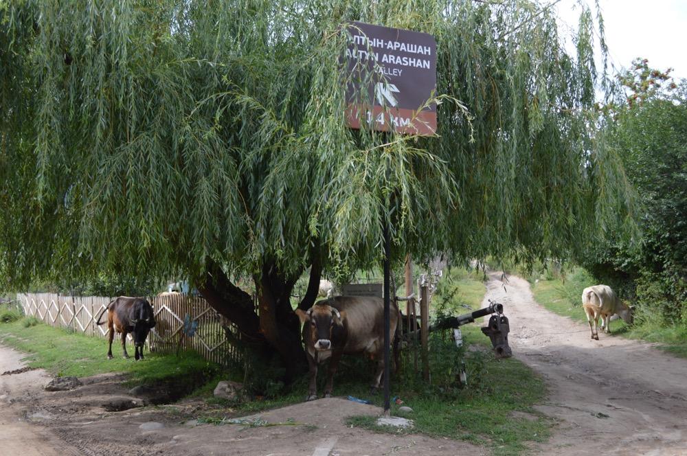 トレッキング(カラコル〜アルティン・アラシャン〜カラコル)【キルギス旅⑥】